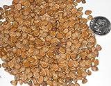 Paquete de semillas de árboles Cotoneaster Europea, Cotoneaster integerrimus ideal para Bonsai 5