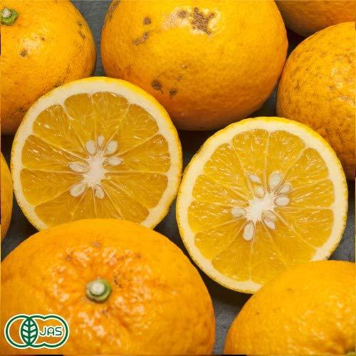 【A・B品混合】 甘夏 10kg 有機JAS (広島県 瀬戸内海の恵み普及会) 産地直送 ふるさと21