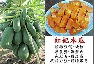 25/50 Taiwan Hong Fe Papaya Tree Seeds High Germination Organic Sweet Fruits (25)