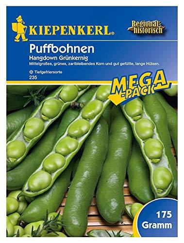 Puffbohnen Grosse Bohnen, Hangdown, Inhalt: 175gr, grünkernig, zahrtbleibendes Korn und gut gefüllte lange Hülsen