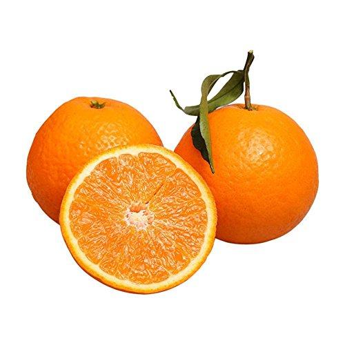 LIANA IRWIN Orangenbaum Samen Balkon Bonsai - 10pcs,Die Frucht ist Große Runde,Saftig und Süß Garten im Freien Obst Pflanze Samen