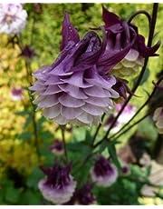 Semillas Europea Columbine Aquilegia vulgaris bonsai semillas de flores raras para el jardín de plantas perennes. 100seeds mezclados del color/del bolso 2