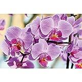 GREAT ART® XXL Poster – Orchideen – Wandbild