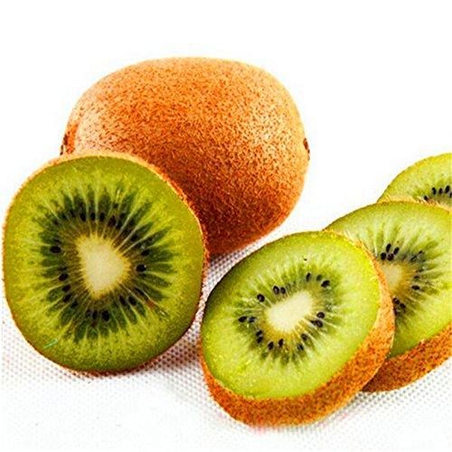KINGDUO 100Pcs Thailand Mini Kiwi Fruits Graines Fleurs Jardin Comestible Bonsai Délicieux Fruits Plantation