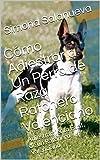 Cómo Adiestrar a Un Perro de Raza Ratonero Valenciano : Adiestramiento Fácil de un Ratonero Valenciano