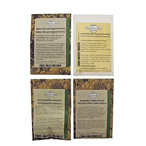 Koffeinhaltige Pflanzen - Samenset mit 4 spezielle Nutzpflanzensorten: Tee, Kaffee, Mate & Kurrajong