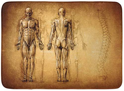 ECNM56B Fußmatten Bad Teppiche Fußmatte Muskel Menschliche Anatomie Zeichnung Alte Leinwand 3D Körper Radiologie Schmerzen 15,8