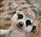 times&more Erdmännchen Bildkalender. Wandkalender 2020. Monatskalendarium. Spiralbindung. Format 30 x 27 cm
