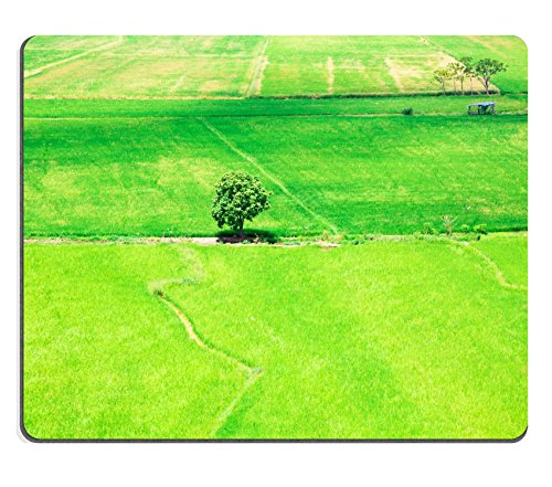 Vina MSD Natural Rubber Gaming Mousepad Image ID: 32755696 Green Natural Thai Rice Farm from The top View for Background