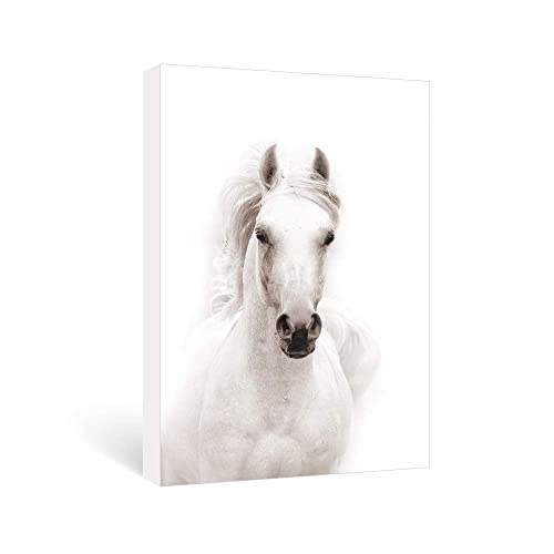 WHITE HORSE BEAUTIFUL WILD  ANIMAL  WALL POSTER ART PICTURE PRINT LARGE  HUGE