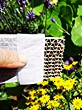 Novo Nem® Florfliegenlarven 150 Stück in Pappwabe...