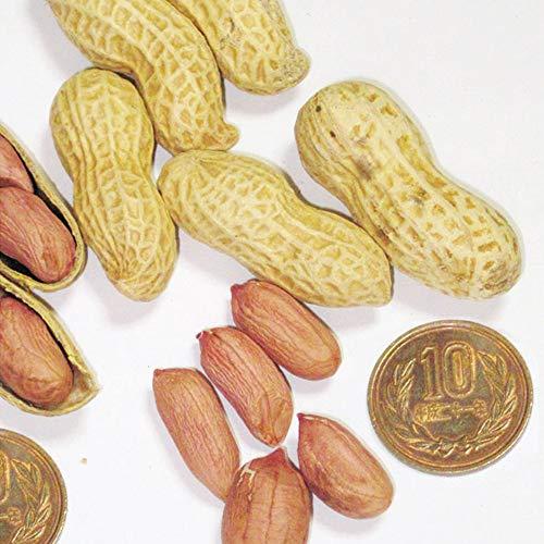 国華園 種 野菜たね ゆで落花生 郷の香 PVP 1袋(30ml) / メール便 配送 21年春商品