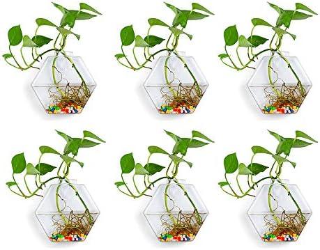 Wall Hanging Glass Planters 6Pcs Hexagonal Shape Plant Pots Terrarium Container Vase with 6 product image