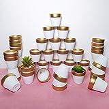 40 Pcs 2.5' Mini Clay Pots Small Terracotta Pots Pottery Planters Cactus Flower Pot Succulent Nursery Pots - Great for Plants, Crafts, Wedding Favors Baby Shower (Matte White Bisque) (Set of 40)