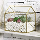 MyGift 6-inch Mini Green House Geometric Design Tabletop Clear Glass Succulent Air Plant Terrarium Box with Brass Metal Frame