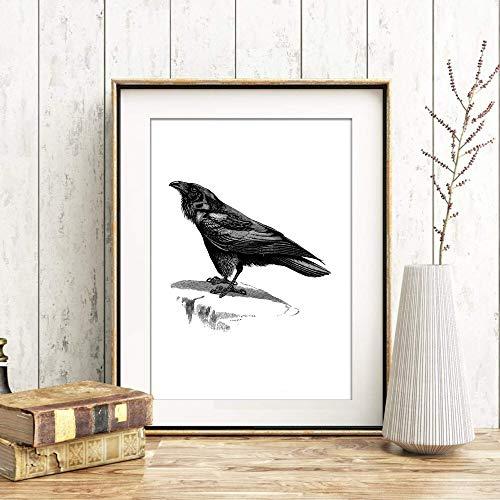 Din A4 Kunstdruck ungerahmt - Rabe Raven Krähe Antik Retro Stich schwarz Vogel Druck Poster Bild