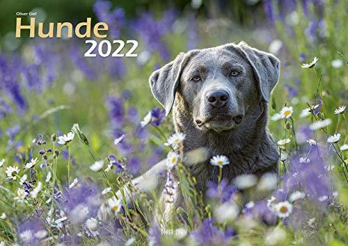 Hunde 2022 Bildkalender A3 quer - Oliver Giel