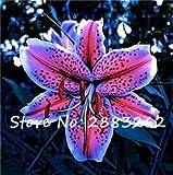 100 piezas de semillas de flores de lirio, hermosas...