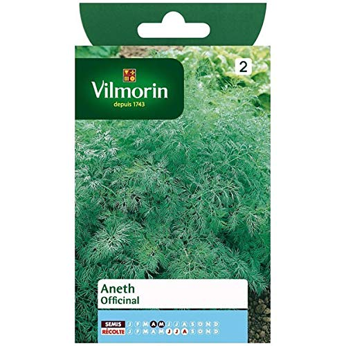 Vilmorin - Sachet graines Aneth Officinal