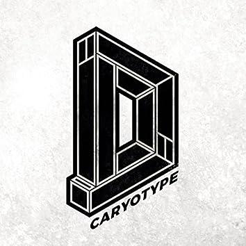 Caryotype