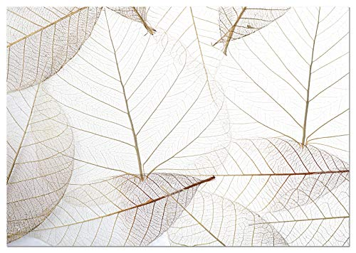 Panorama Póster Hoja Trasluz 70x50cm - Impreso en Papel 250gr - Láminas Cuadros Hojas Verdes - Láminas para Enmarcar - Cuadros Decoración Salón - Cuadros Botánica - Cuadros de Plantas