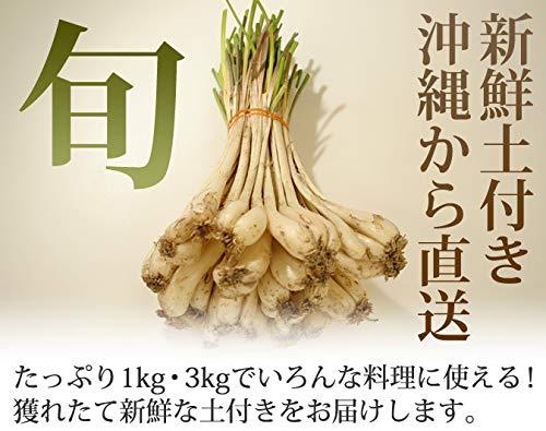 【伊江島産】泥付き生島らっきょう(約3�s)