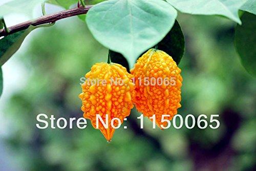 6pcs de vente chaude / lot Lama Grape (Gourd famille) Graines d'expédition Délicieux sain Fruit AntiDIY jardin gratuit