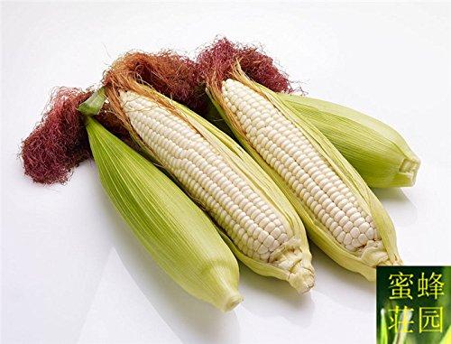 maïs chaud maïs blanc fruits graine blanche maïs cireux blanc doux parfumé environ 20 graines