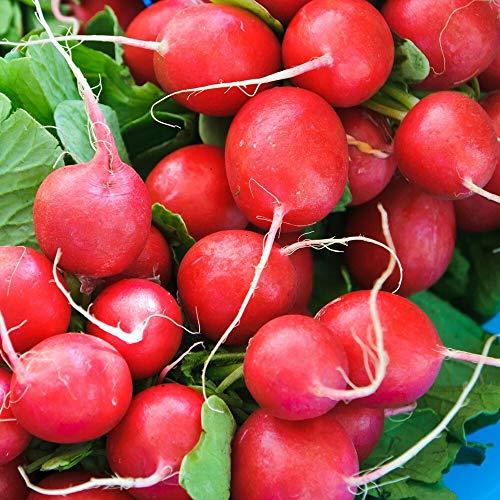 ca. 500 Samen Cherry Belle Radieschen - kirschrot, schnellreifend