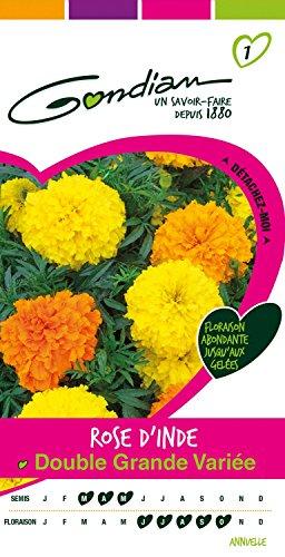 Gondian 166575 Semences - Rose d'Inde Double Grande Variee - CP 1, Multicolore, 1x8.1x16 cm