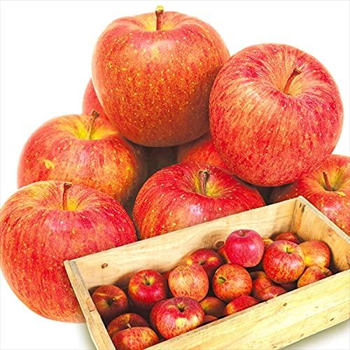 国華園 りんご 青森産 お買得 木箱サンふじ 約9�s ご家庭用 食品
