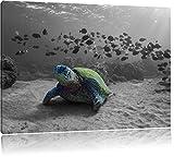Schildkröte im Ozean schwarz/weiß Format: 100x70 auf