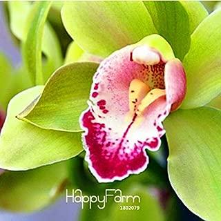 Orchid Cymbidium Plant Cymbidium Floribundum Sale!Unique Green Cymbidium Orchid Bonsai Elegant Flower Plant Ornamental Flowers Garden 100 PCS,#34S48T