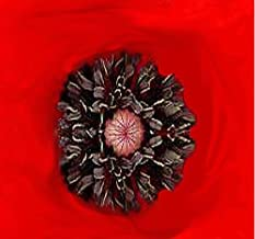 BIG PACK - RED POPPY (100,000) HEAVY BLOOMER flower Seeds - Papaver rhoeas - Zones: 3-9 By MySeeds.Co