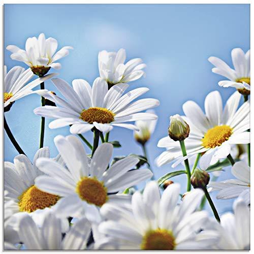 Artland Glasbilder Wandbild Glas Bild einteilig 30x30 cm Quadratisch Natur Blumen Blüten Gänseblümchen Margeriten Landhaus T2YI