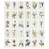 Photo Collage Kit for Wall Aesthetic Décor, Hand-painted plant picture collage Aesthetic Pictures for Wall Collage Kit, 32Pictures Set 5x7 inch Aesthetic Pictures for Wall