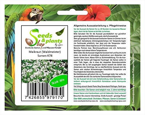 Stk - 60x Maikraut Waldmeister Samen Garten Blumen Pflanze Saatgut K78 - Seeds Plants Shop Samenbank Pfullingen Patrik Ipsa