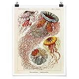 Bilderwelten Poster - Vintage Lehrtafel Quallen -