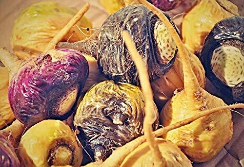 1000 Maca Samen, Lepidium meyenii seeds, peruanischer Ginseng, Maca Seeds