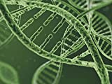 DNA and Nucleic Acids