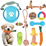 Chew Toys For Dogs - Best Reviews Guide