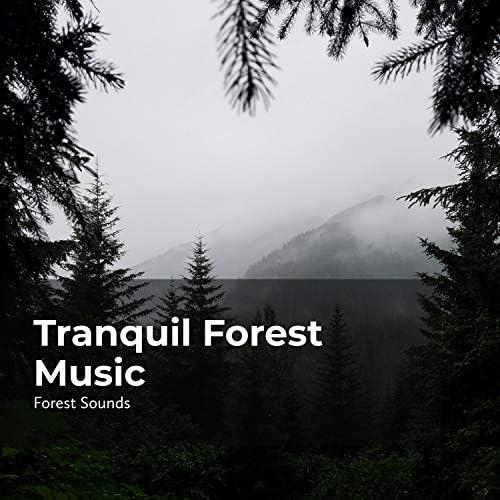 Forest Sounds, Ambient Forest & Rainforest Sounds