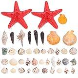 ABOOFAN 1 Juego de Conchas de Mar Perlas de Playa para Decoraciones de Boda Manualidades Fabricación de Velas Tanque de Peces Bonsai Micro Paisaje Florero Rellenos