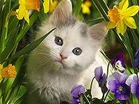 ダイヤモンドの絵画 ダイヤモンド刺繡動物猫ダイヤモンド絵画フルスクエアドリル刺繡クロスステッチ花ラインストーン写真