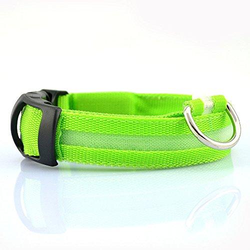 Winnes LED Hundehalsband mit USB Wiederaufladbar Blinkender LED Hunde Sicherheits Halsband Nacht Hundeband für Hunde, Haustier (L 2.5cm X (45cm-52cm), Grün)