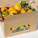 10 Kg ⎜Caja de Naranjas Selectas de Mesa ⎜De Valencia ⎜Dulces y Maduras ⎜En su punto ⎜ Para comer