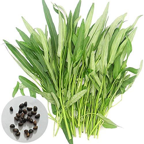 Wasser-Spinat-Samen, 200Pcs / Beutel Samen Natur Nicht-Hybrid Grüne Umweltfreundliche Wasser-Spinat Samen für die ideale Outdoor-Garten Geschenk