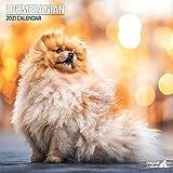 Traditioneller Pomeranian Kalender 2021