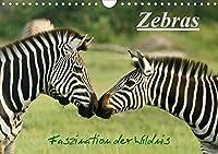 Zebras - Faszination  der Wildnis (Wandkalender 2021 DIN A4 quer): Zebras: Schoene Momentaufnahmen der faszinierenden gestreiften Pferde in freier Wildbahn Namibias, Ugandas und Botswanas (Monatskalender, 14 Seiten )