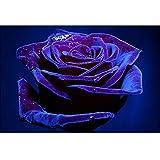 jiushice Cadre Photos Floral Rose Gift s décoration de Chambre en Acrylique 40x60cm